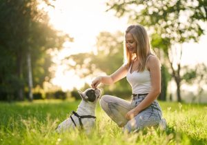 A-Z Guide To Puppy & Dog Training