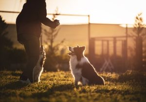 Dog Training – Natural Remedies For Health
