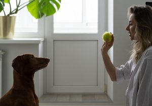 Dog Training - Become A Dog Trainer
